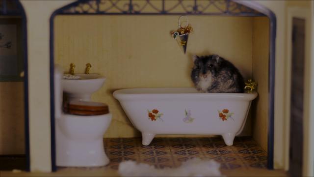 hamster-3
