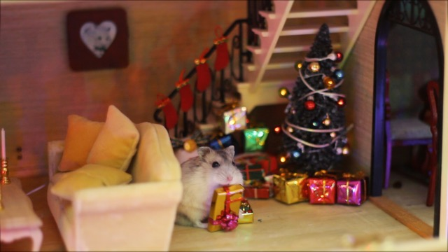 hamster-7